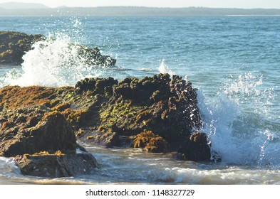 The foam of breaking waves is spraying over brown rocks. These are covered with brown and green seaweed. A headland is in the ditance, and the sky is clear.