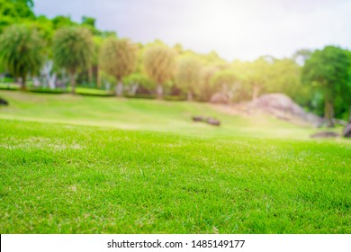 Focus nature green grass in golf court garden blur park on Sky, stone, palm tree background. Low angle shot style. Sunlight and flare background concept.