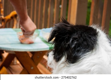 Focus is on the dog who can be seen from behind, coveting the snacks on the table that are right at nose level