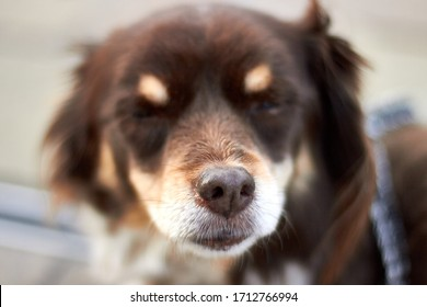 Focus on dog's nose, cute little dog