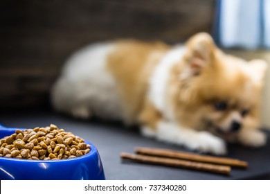 Focus on food of dog.Pomeranian dog sitting lonely on the table with food and snack in morning day. Depress, anorexia, unhealthy and sick dog concepts.