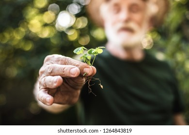 Focus on hand of mature agrarian holding young green sprig