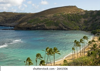 Focus on swaying palm trees in Hanauma Bay, Oahu, Hawaii
