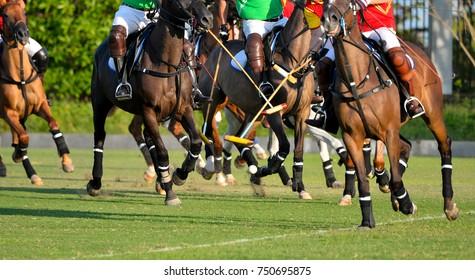 Focus the Polo Ball in horse Polo match.