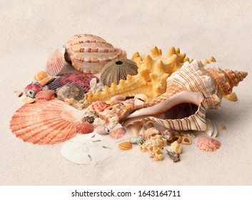 Focus Stacked Image of Tropical Sea Shells, Sand Dollars and  Sea Urchins on a White Sand Beach
