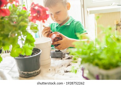 Focused boy in green t shirt pressing soil in pot while standing near table and gardening at sunlight at home