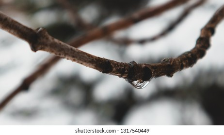 Focused branch with frozen water droplet