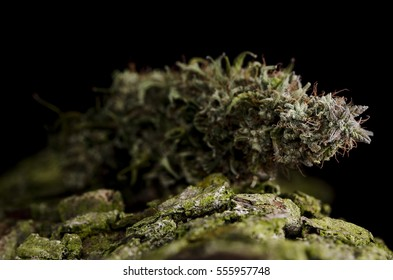 Focused flower of medical marijuana weed bud with resin