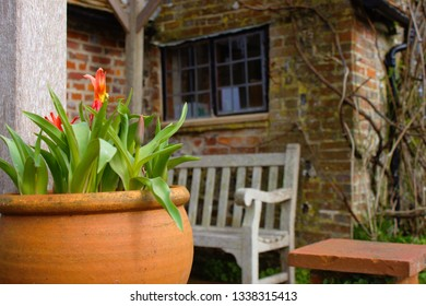 Focused flower pot and a slightly blurry background. Rural clergy house in East Sussex, UK.