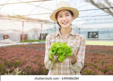 Focused at green oak vegetable in hand of asian woman farmer in greenhouse hydroponic organic.Small business entrepreneur and organic vegetable farm and healthy food concept.blurred of farmer woman.