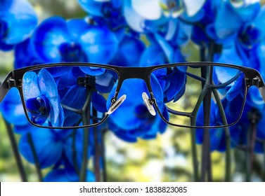 Focused image of bouquet of beautiful blue orchids.  Better vision concept. Glasses for nearsighted.