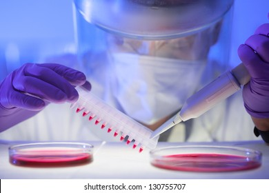 Focused life science professional pipetting human serum media containing HIV infected cells from petri dish to microtiter plate. High protection degree work.