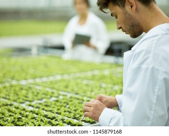 Focused man in white gown working with small green seedling doing research of modern agricultural plantation