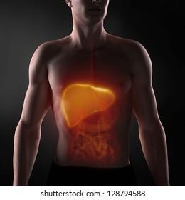 Focused on man liver