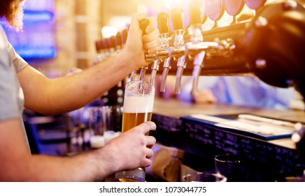 Focused professional bartender pouring draft beer in the modern bar.