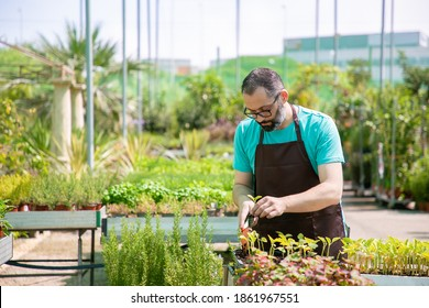 Focused professional gardener repotting sprouts, using shovel and digging soil. Front view, low angle. Gardening job, botany, cultivation concept.