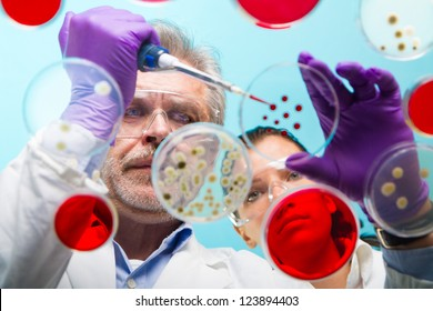 Focused senior life science professional pipetting solution into the pettri dish.  Lens focus on the man researchers's face.