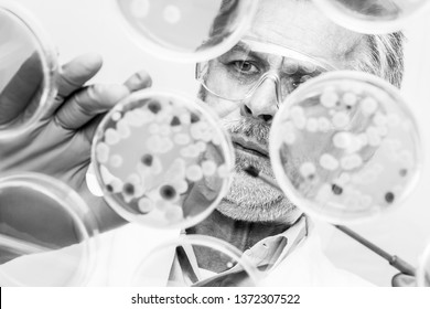 Focused senior life science professional grafting bacteria in the pettri dishes. Lens focus on the pipette. Black and white image.