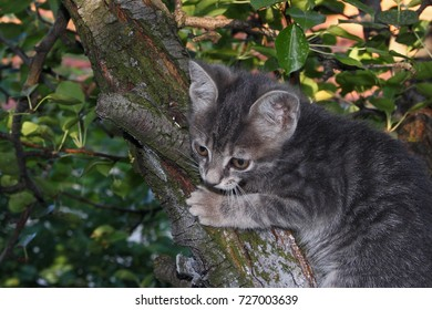 Focusing kitty on the tree branch