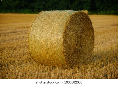 Fodder, forage, haymaking. Hay bale dry on field, agriculture. Agriculture, farming, ecology. Harvest, crop, harvesting. Haylage rolled on cut grass, fodder.