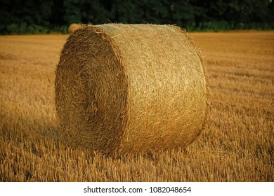 Fodder, forage, haymaking. Hay bale dry on field, agriculture. Agriculture, farming, ecology. Harvest crop harvesting Haylage rolled on cut grass fodder