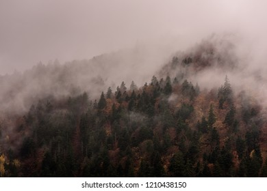 Fog above pine forests. Misty morning view in wet mountain area.