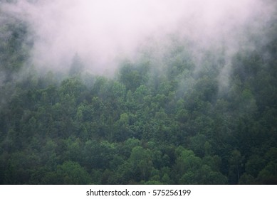 Fog above the trees
