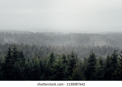 Fog above the trees of the Harz landscape