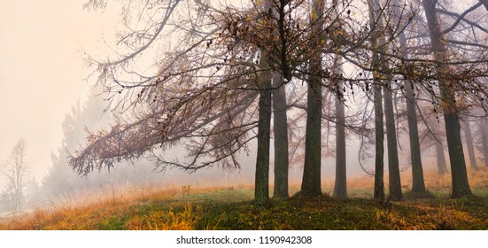 Fog and autumn colors in the forest of regional park Campo dei Fiori Varese