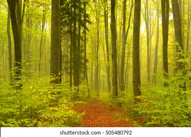 fog in the autumn forest, landscape