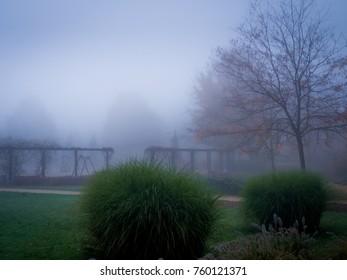 fog autumn leaf