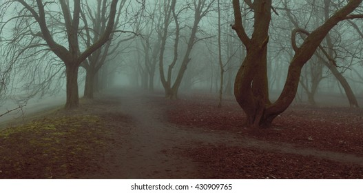 fog background panorama mystycal park alley autumn trees fall foliage shallow depth of field stylized filter