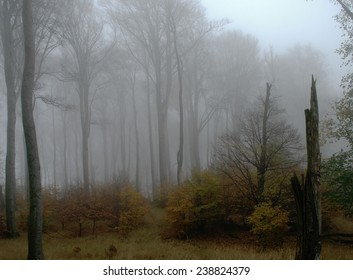 Fog in the beech forest on a haunted place