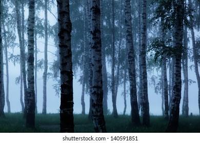 Fog in birch forest