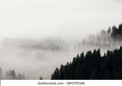 fog in the black forest