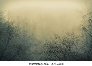 Fog and branches of trees