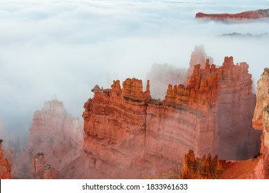 Fog in Bryce Canyon National Park, Utah, Usa, America