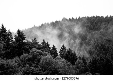 The fog caught in the treetops, black-and-white
