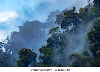 fog clearing from the jungle rain forest near Cachi Costa Rica,