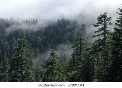 Fog cover the mountain forest. Misty view from Larch Mount. USA Pacific Northwest, Oregon.