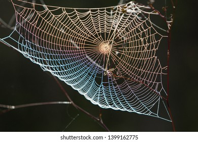 The fog covers the spider webs in the forest