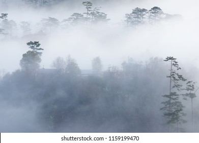 The fog of Dalat plateau lands, Vietnam. background pine forest with fog and sun rays