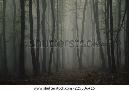fog in dark forest