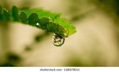 Fog  drops on flower and leaf
