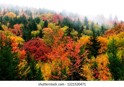 Fog and fall color along the Highland Scenic Highway, Route 150, National Scenic Byway, Pocahontas County, West Virginia, USA