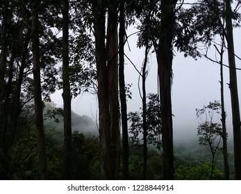 Fog at Florest