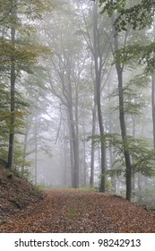 Fog in a forest