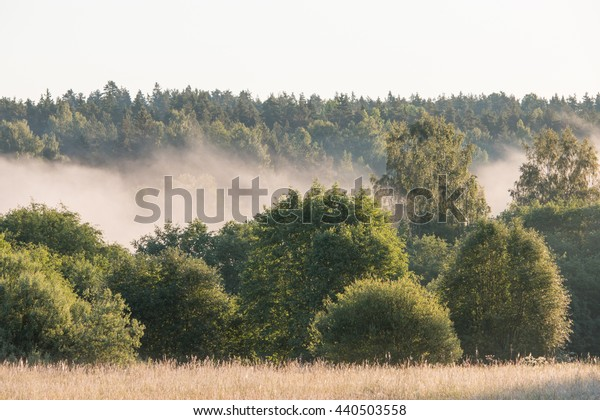 Fog in the forest above the river.
