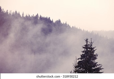 Fog in the forest in autumn time