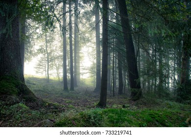 Fog in the forest in the bavarian forest
